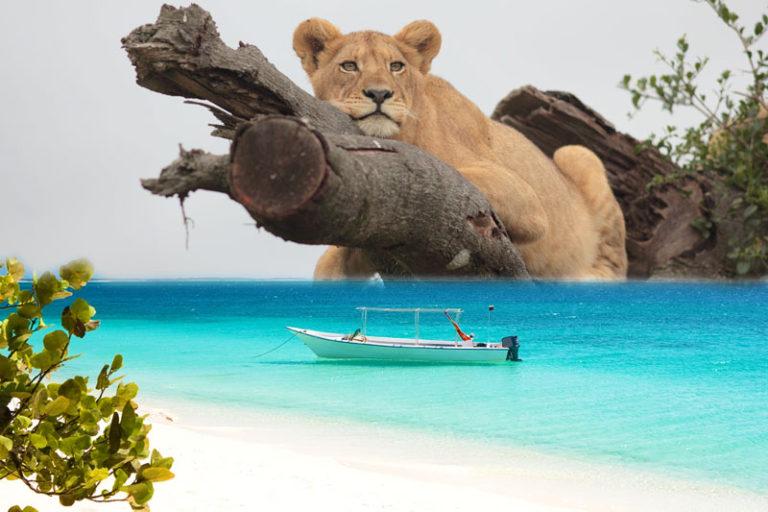 Σαφάρι Τανζανία – Ζανζιβάρη