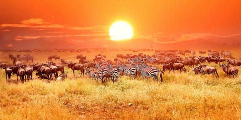 Τανζανία Σαφάρι & Ζανζιβάρη Ατομικό Ταξίδι 9 ημερών