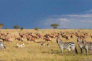 Τανζανία Σαφάρι Ατομικά Ταξίδια 7 ημερών